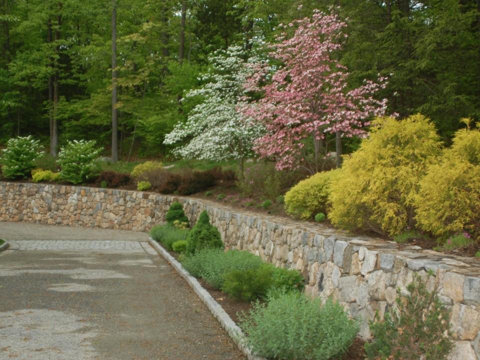 Fieldstone Wall Perriennal Planting and Flowering Trees