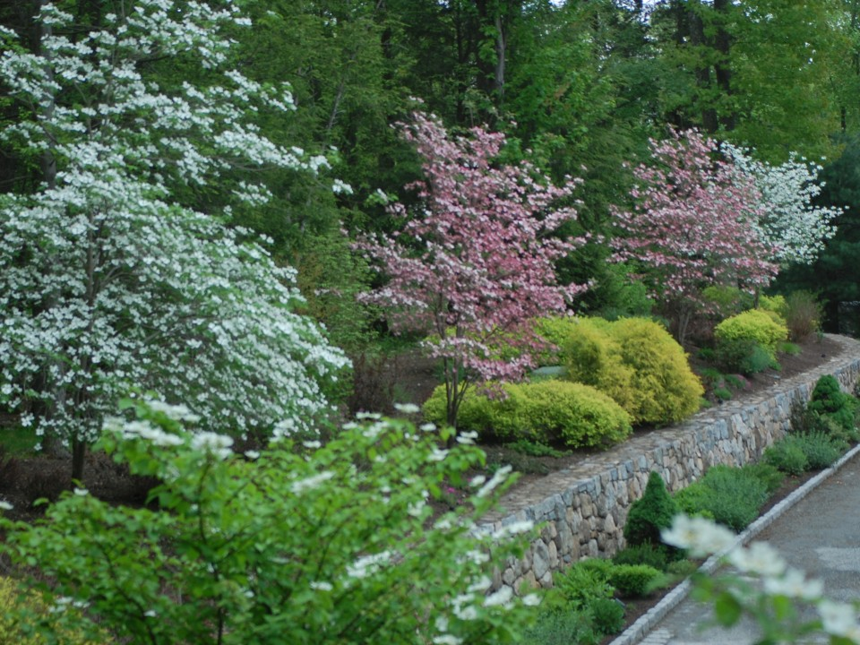Fieldstone Wall with Perennial Plantings and Flowering Trees